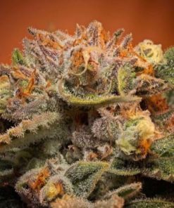 Buy Cali Orange Bud Online